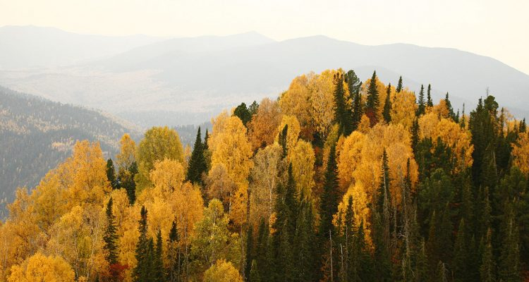 Altai mountains in the fall.